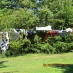 Windy Laundry